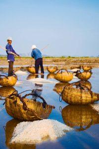 Kampot salt fields