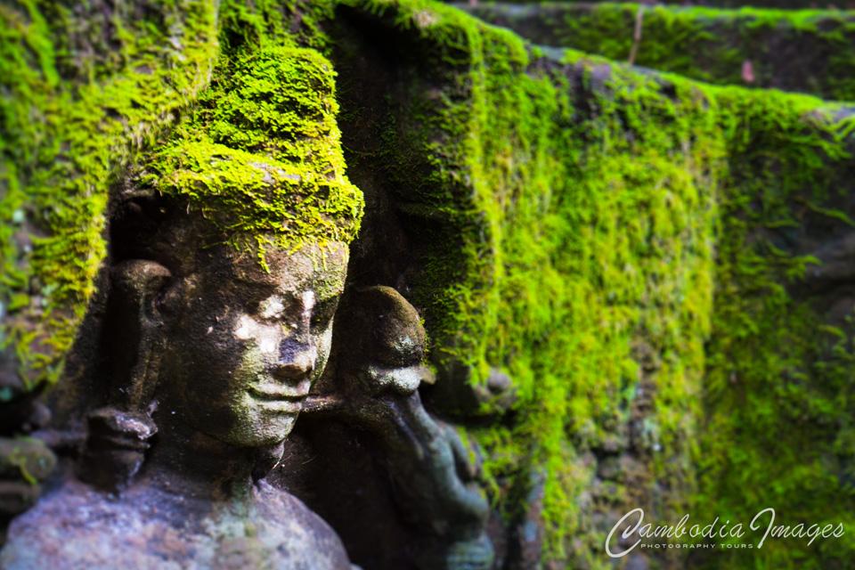 Angkor wat Ta Phrom moss