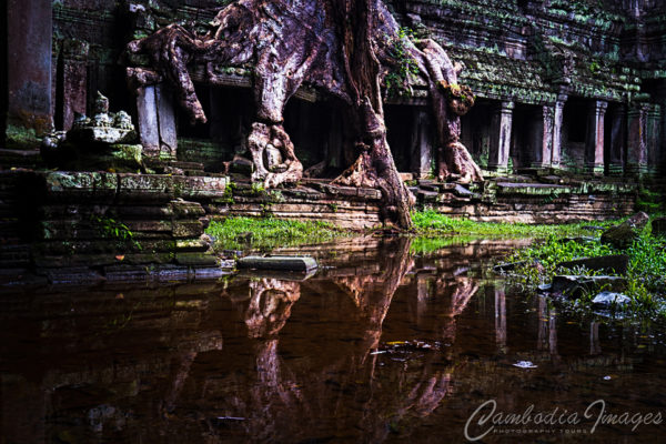 Roots of Angkor Preah Khan