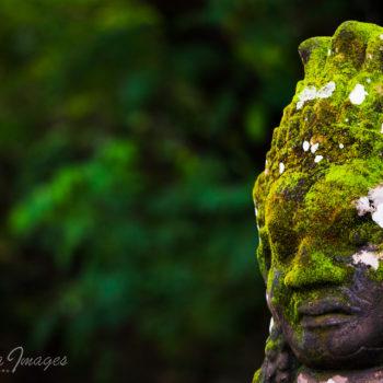 Angkor photo workshop north gate cambodia images