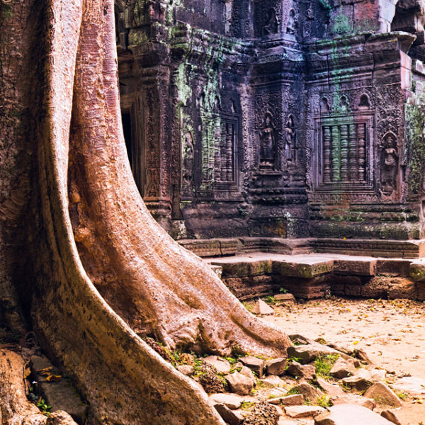 Angkor wat photography Ta Prohm tree roots
