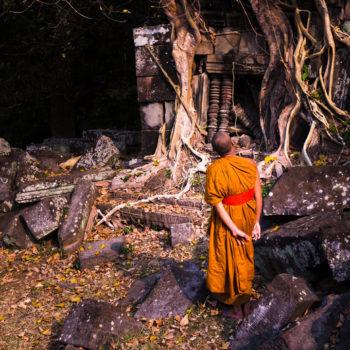 monk fig tree anfkor wat